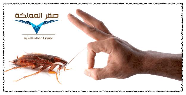 صورة شركة مكافحة الصراصير بالرياض