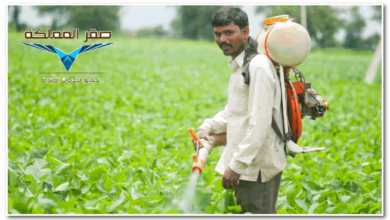 Photo of شركة رش مبيدات حشرية بالرياض